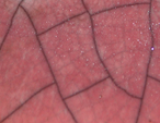 Raku Glaze Colors : rose