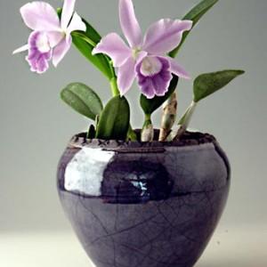 cache pot orchid planter jardiniere