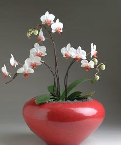 jardinere , orchid planter